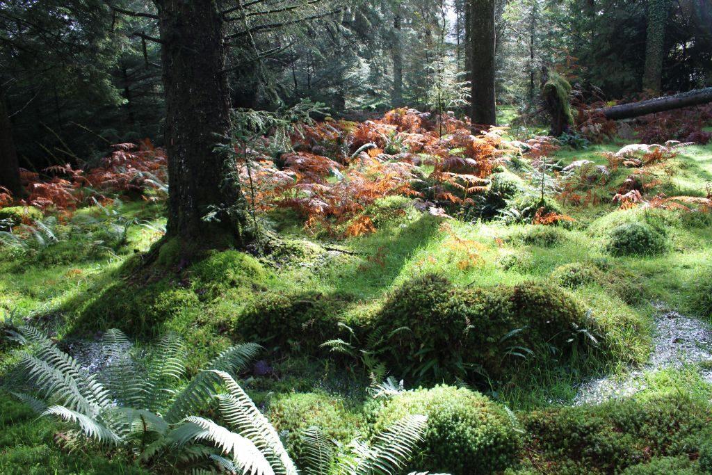wälder entlang dem Devonport Leat