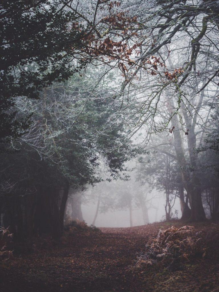 Dartmoor im Winter
