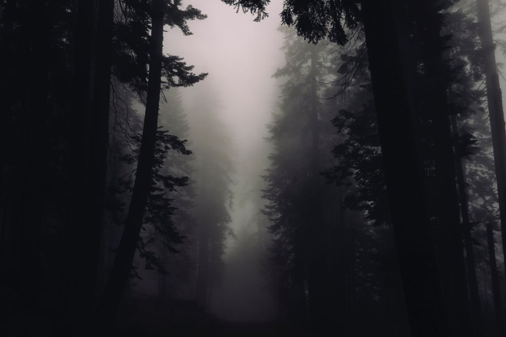 Wald und Nebel im Dartmoor