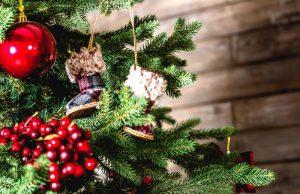Weihnachtsbaumzweig