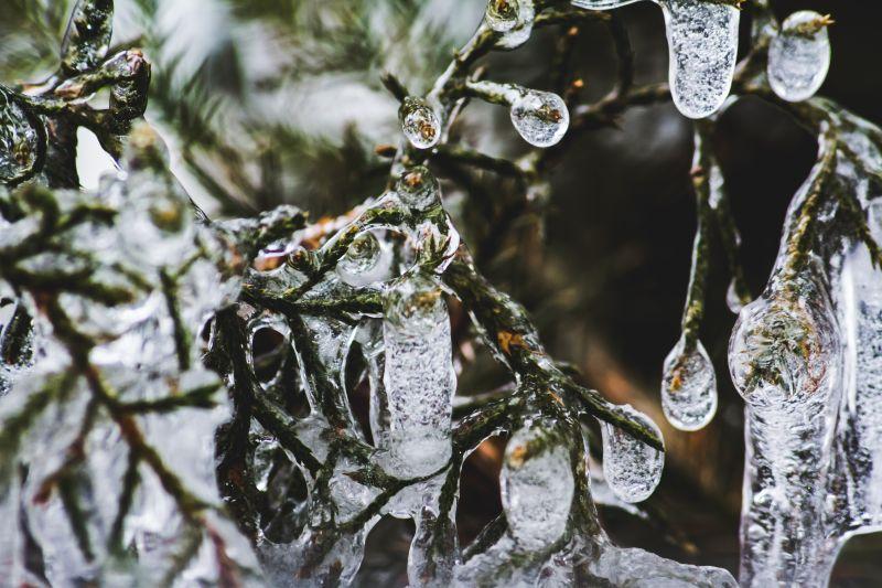 Selbst die kalte Nordsee schreckt die britischen Schwimmer an Weihnachten nicht ab. Mit Eis überzogene Zweige.