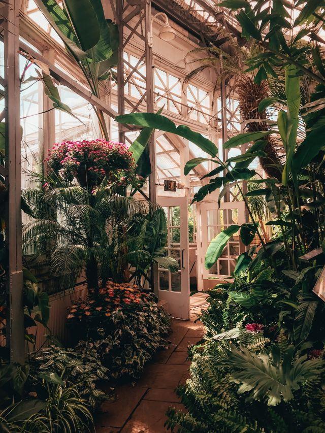 Hohes Conservatory weiß mit vielen hohen Palmenarten. Wintergarten
