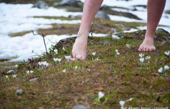 barfuß im Gras mit Krokus im Hintergrund Schnee