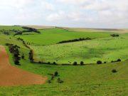 South Downs Way weite Ausblicke über Wiesen