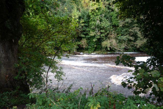 Fluss Büsche