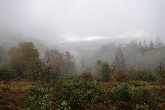 Nebel Büsche