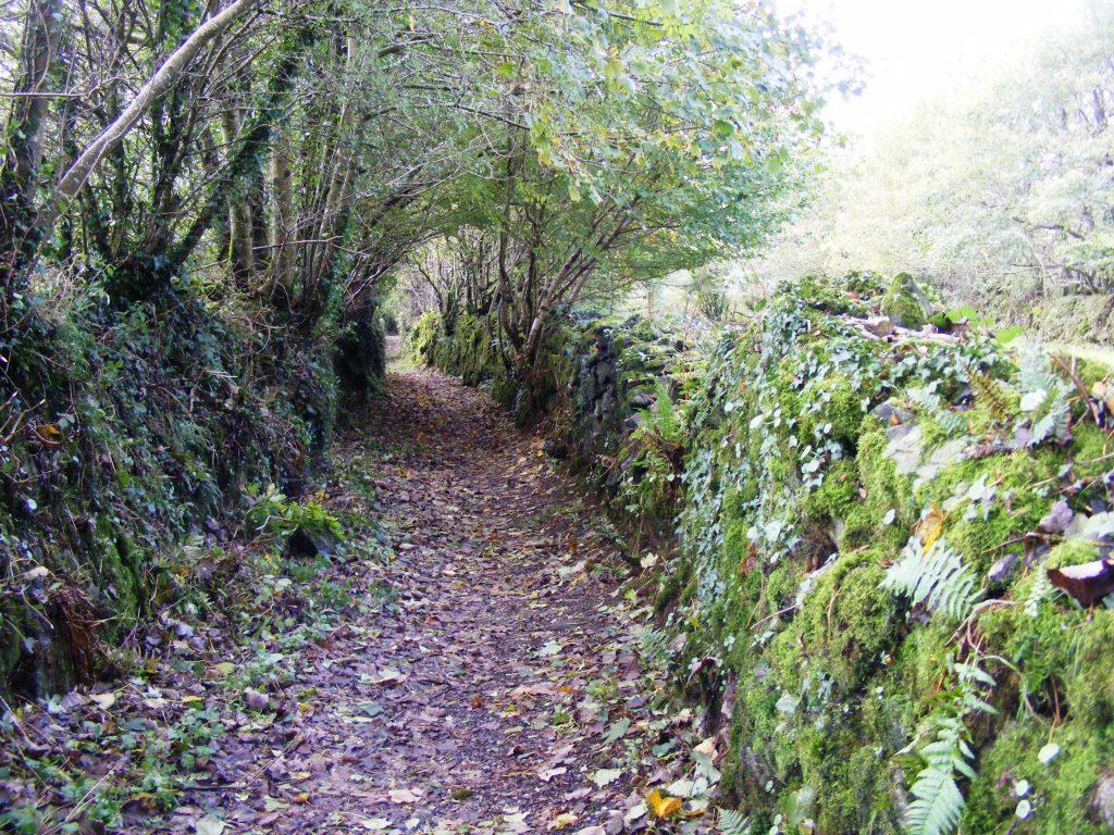 Hohlwege in Dartmoor und Dorset Böschung rechts und links und Blätterdach