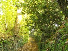 Hohlwege in Dartmoor und Dorset holloway Laub Weg