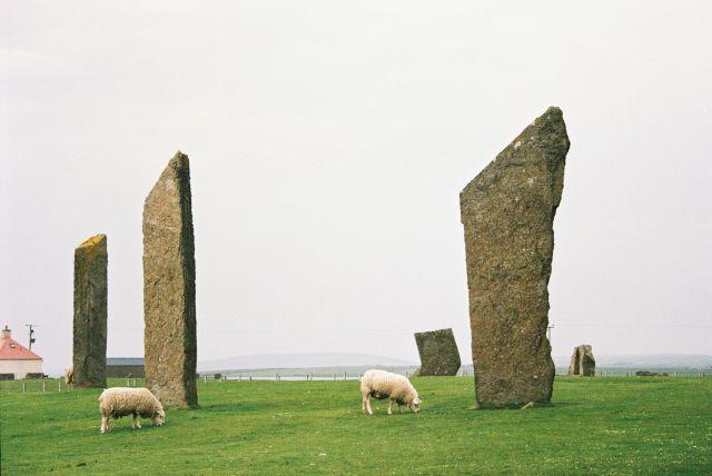 Steinstehelen auf grüner Wiese Schafe