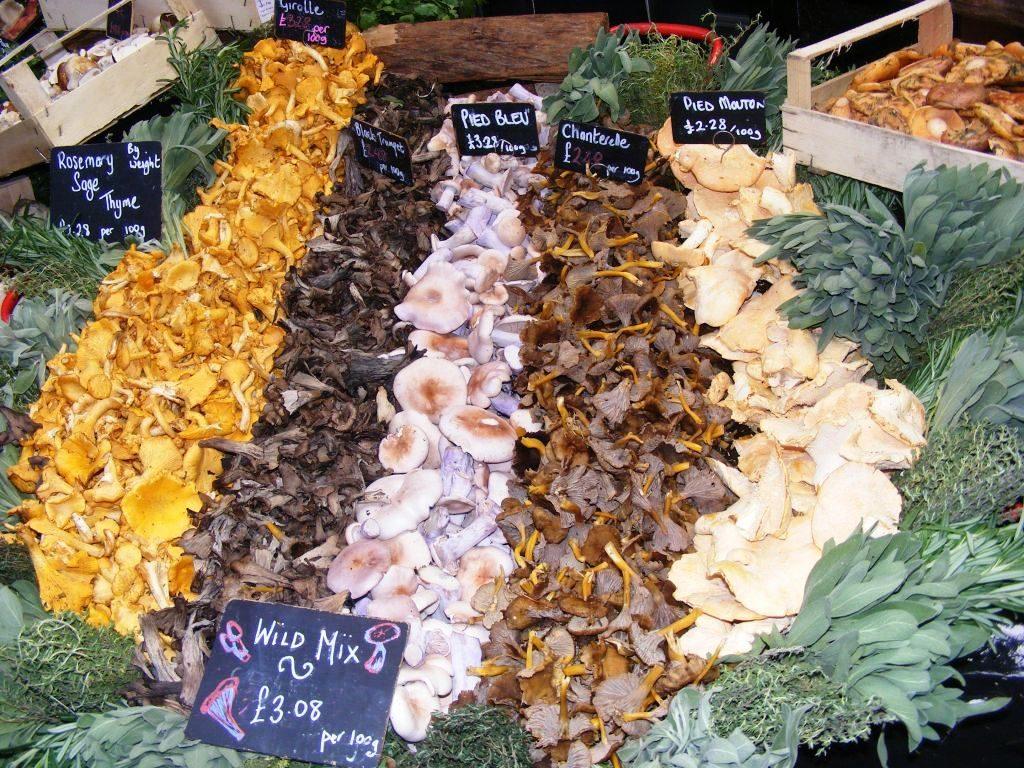 Verschiedene Pilzsorten angeordnet