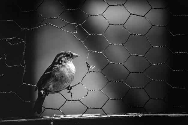 Vogel in Maschendraht